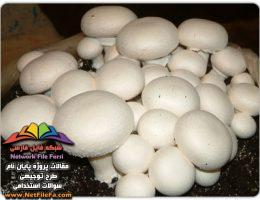طرح توجیهی پرورش قارچ خوراکی