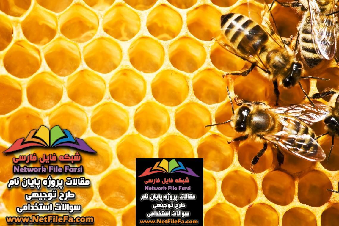طرح توجیهی پرورش و نگهداری زنبور عسل | فنی ، اقتصادی و مالی