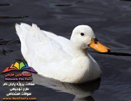 طرح توجیهی پرورش اردک مادر | فنی ، مالی و اقتصادی