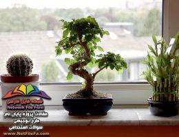 طرح توجیهی پرورش گل و گیاهان زینتی | فنی ، مالی و اقتصادی